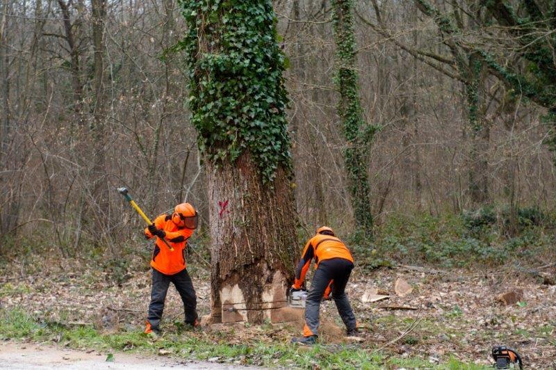 Découverte de la forêt des Grands-Avaux